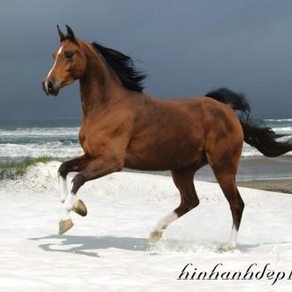Những hình ảnh đẹp đáng yêu của động vật trong cuộc sống