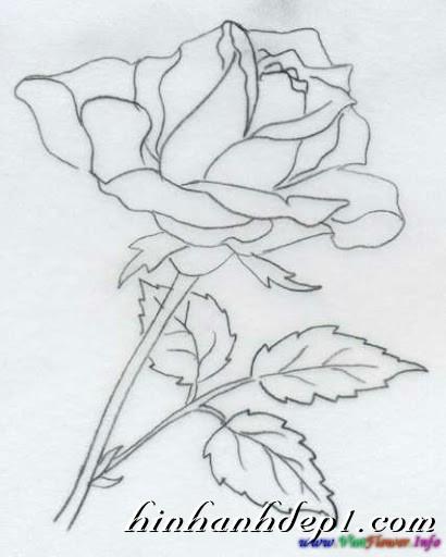 Hình vẽ 3D đẹp như thật bằng bút chì