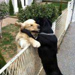 Chùm ảnh vui hài hước của động vật trong cuộc sống quanh ta