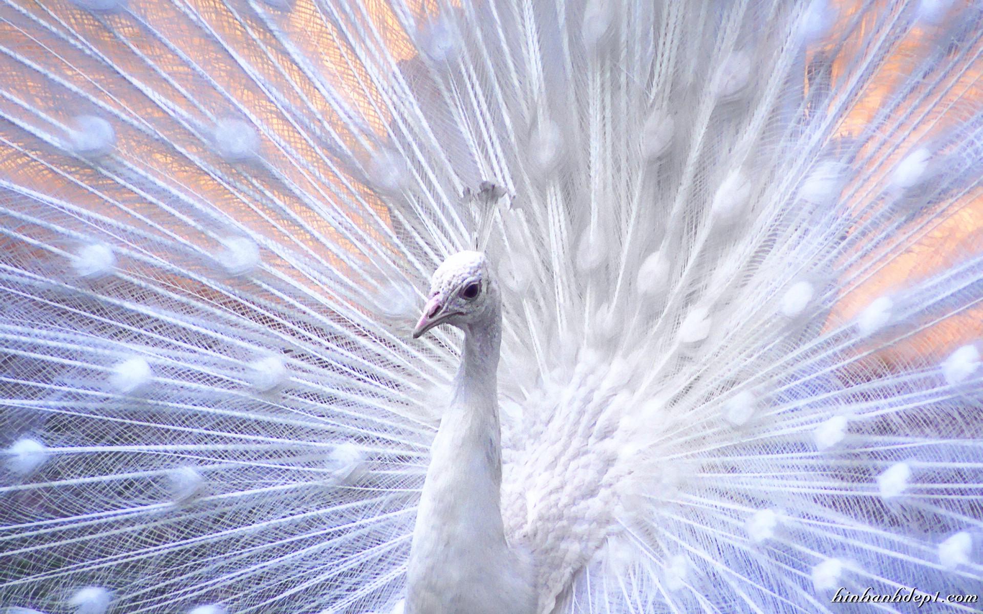 Hình ảnh đẹp full HD các loài động vật làm ảnh nền cho máy tính