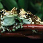 Bộ sưu tập hình ảnh đẹp full HD các loài động vật