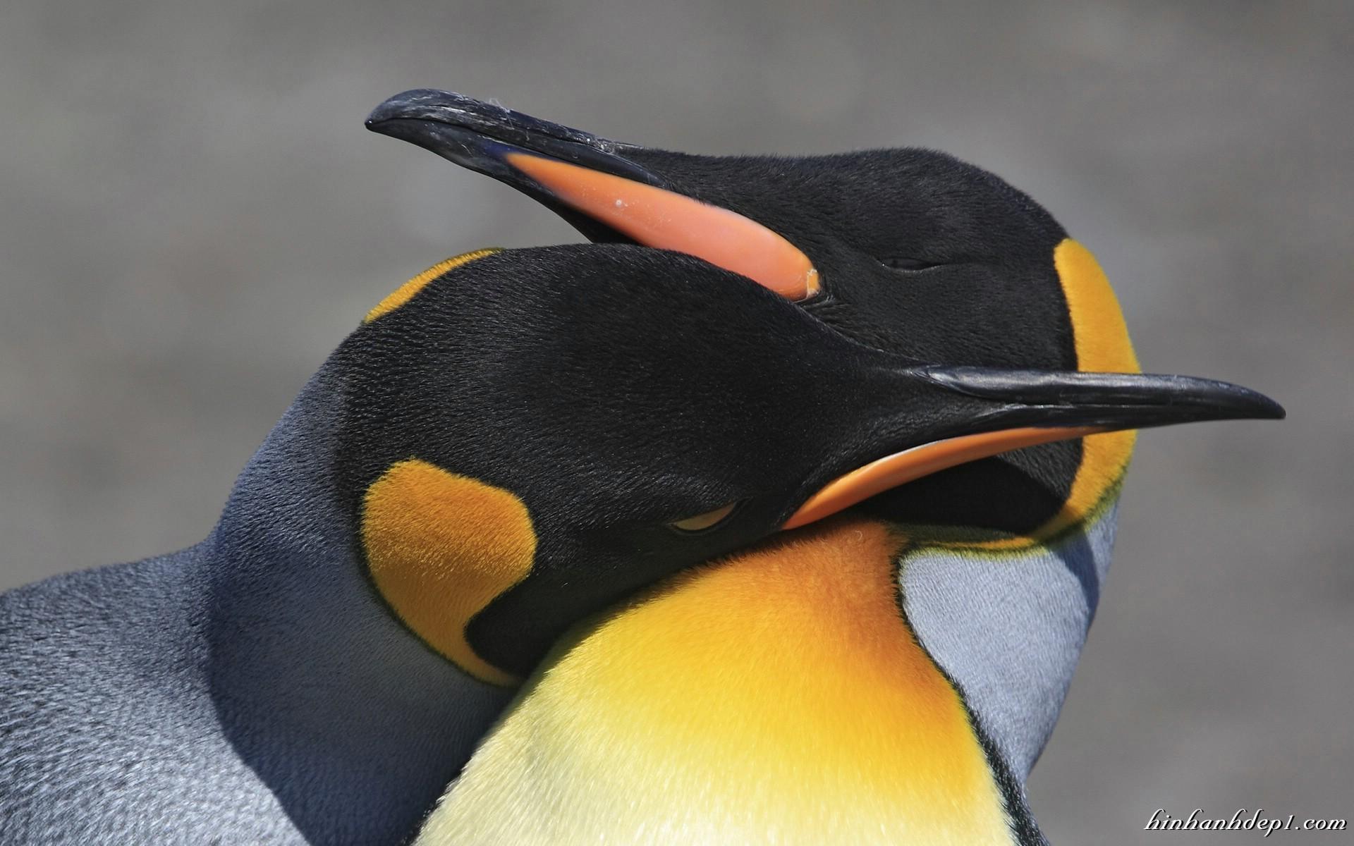 Bộ hình nền các loài động vật đáng yêu full HD đẹp và dễ thương