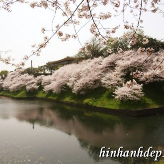 Mát mắt với ảnh nền hoa cỏ mùa xuân khoe sắc