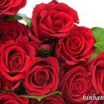 Ảnh nền hoa hồng lãng mạng