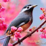 Ảnh nền sinh động từ những chú chim đa màu sắc