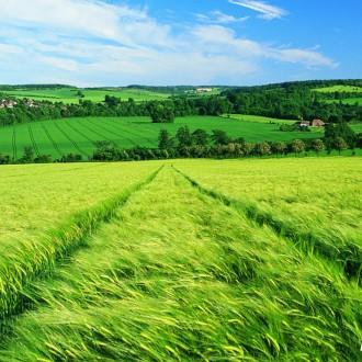 Thả hồn vào ảnh nền đồng cỏ mát mẻ