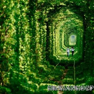 Bộ hình nền full HD về đường hầm tình yêu