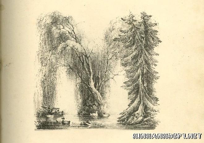 Ảnh nền bảng chữ cái đẹp được tạo từ thiên nhiên (12)