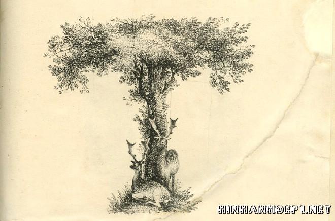 Ảnh nền bảng chữ cái đẹp được tạo từ thiên nhiên (19)