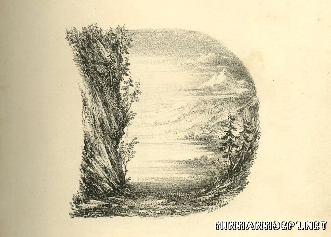 Ảnh nền bảng chữ cái đẹp được tạo từ thiên nhiên (3)