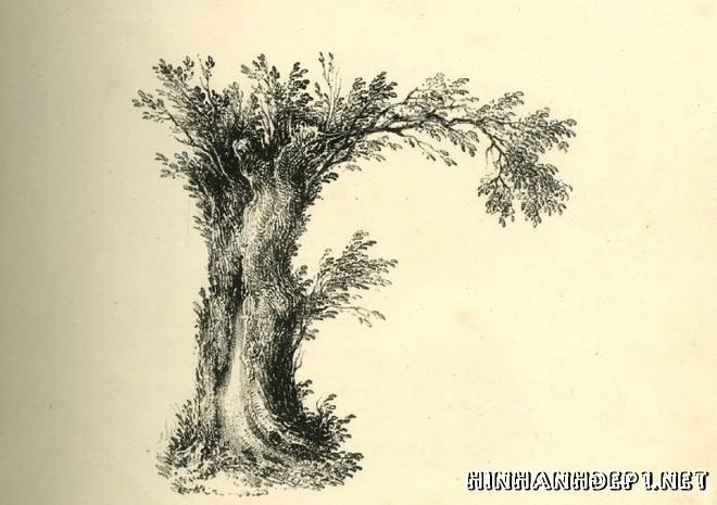 Ảnh nền bảng chữ cái đẹp được tạo từ thiên nhiên (5)