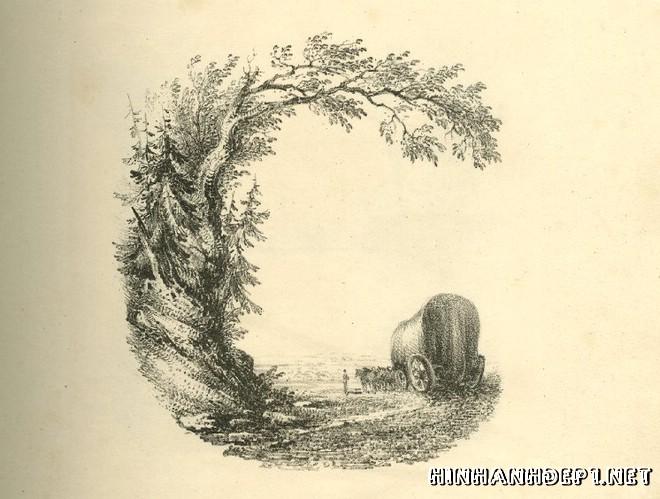 Ảnh nền bảng chữ cái đẹp được tạo từ thiên nhiên (6)