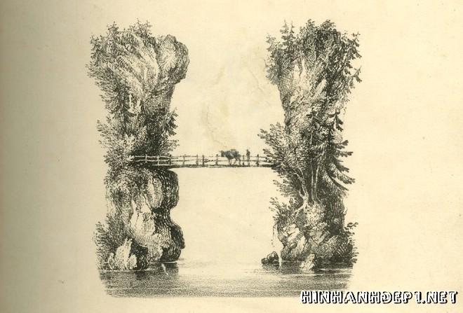 Ảnh nền bảng chữ cái đẹp được tạo từ thiên nhiên (7)