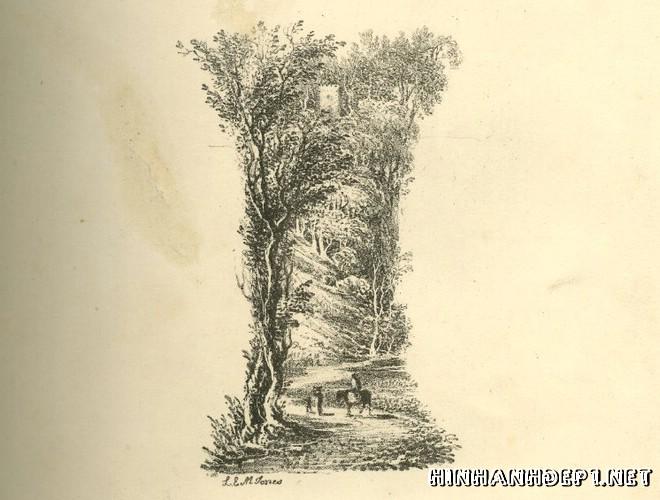 Ảnh nền bảng chữ cái đẹp được tạo từ thiên nhiên (8)