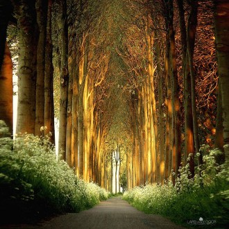 Cùng ngắm bộ hình nền những con đường đẹp nhất hành tinh