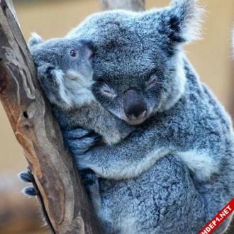 Hình ảnh đẹp về tình yêu thương của các loài động vật