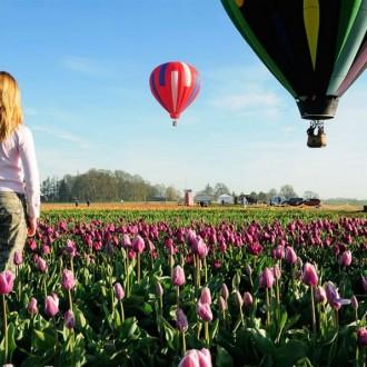 Hình nền hoa Tulip full HD cực đẹp cho máy tính