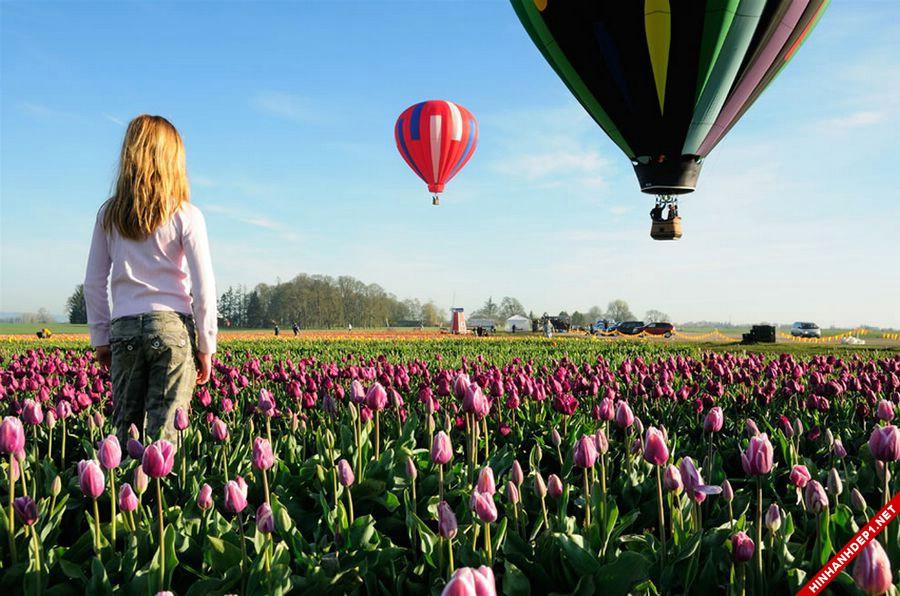 hinh-nen-hoa-tulip-full-hd-cuc-dep-cho-may-tinh