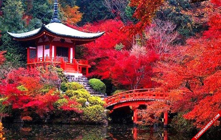 Những hình ảnh về phong cảnh mùa thu đẹp mê hồn