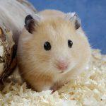 Bộ ảnh về các loài động vật đáng yêu nhất quả đất
