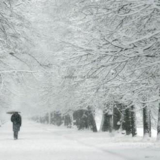 Bộ sưu tập hình nền tuyết rơi đẹp tuyệt vời cho mùa đông