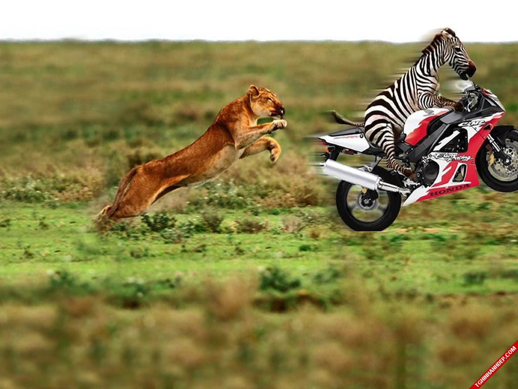 Khoảnh khắc hài hước khó đỡ của các loài động vật