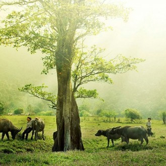 Làng quê Việt đẹp thơ mộng qua ống kính nhiếp ảnh gia