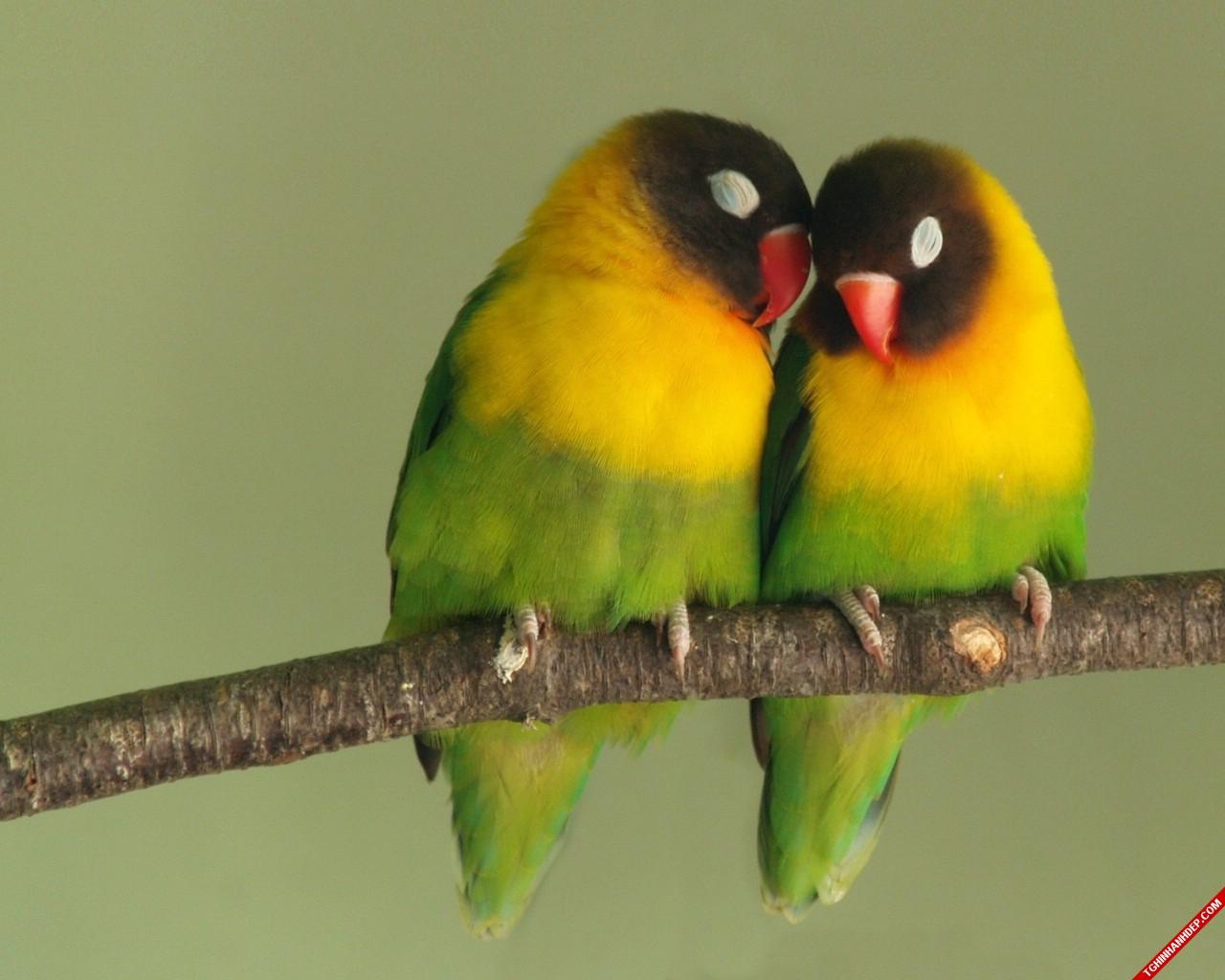 Những khoảnh khắc siêu cute của các loài động vật