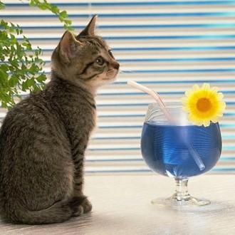 Tổng hợp những bức ảnh về mèo con đáng yêu nhất
