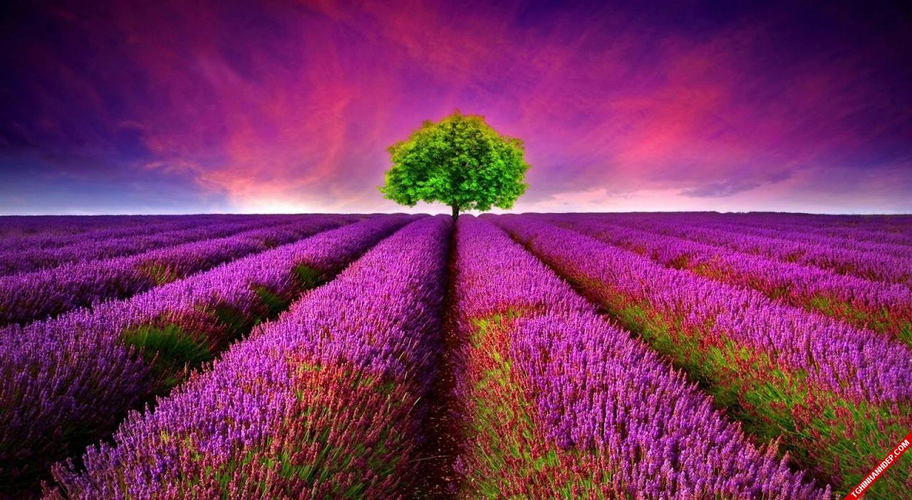 Ảnh nền đẹp với phong cảnh thiên nhiên 3D tuyệt sắc