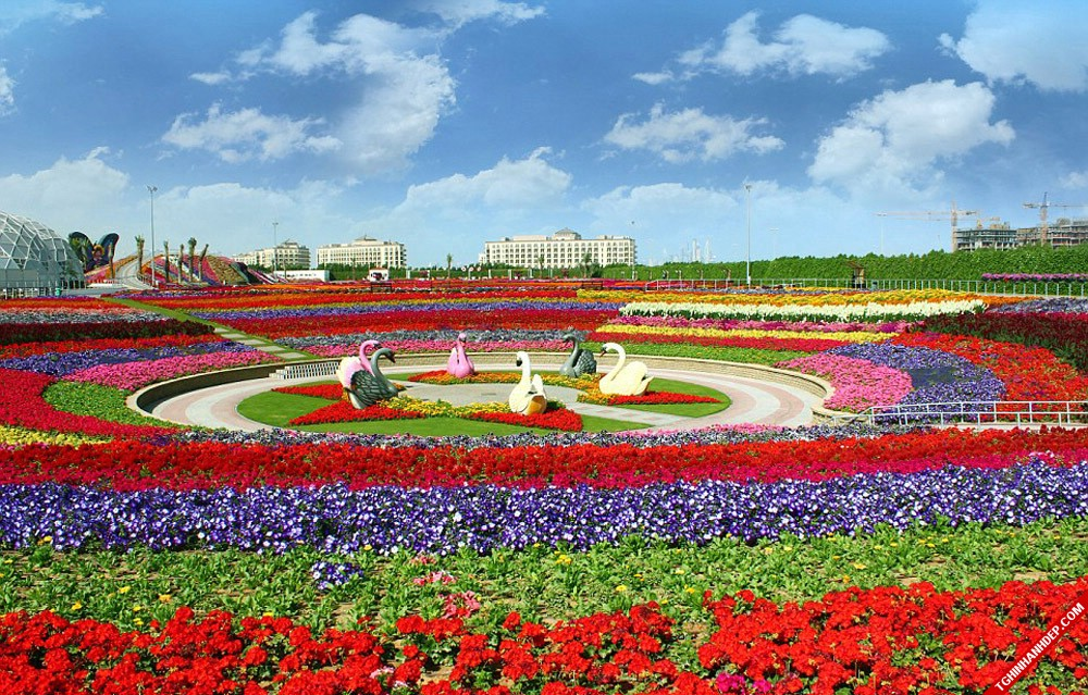 chiem-nguong-ve-dep-tuyet-voi-cua-vuon-hoa-miracle-garden-dubai (4)