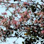 Hình ảnh hoa đào đẹp ngất ngây vùng núi phía Bắc