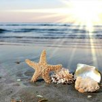 Hình ảnh vỏ sò và sao biển cực dễ thương