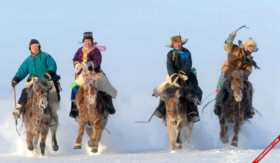 Bộ ảnh đẹp về ngựa trên thảo nguyên Mông Cổ