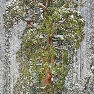 Mê mẩn với 16 loại cây đẹp và độc đáo nhất thế giới