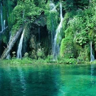 Những hình ảnh đẹp nhất về rừng già nguyên sinh trên thế giới