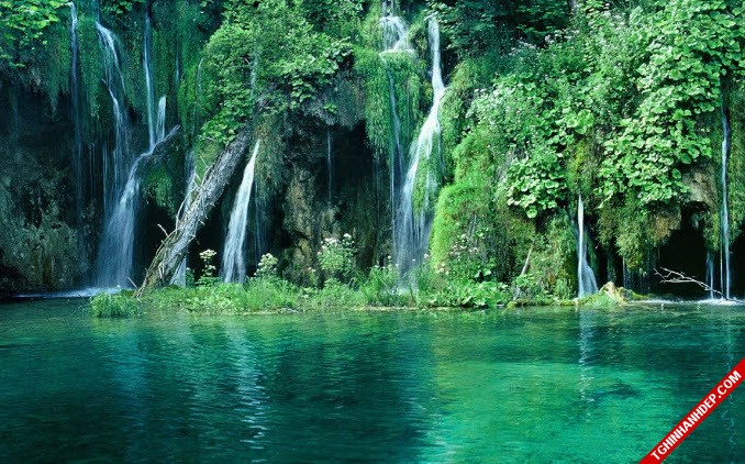 Những hình ảnh đẹp nhất về rừng già nguyên sinh trên thế giới (1)