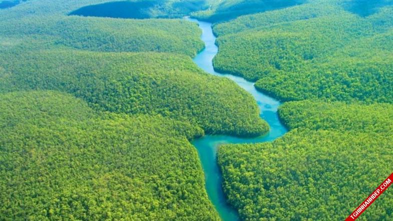 Những hình ảnh đẹp nhất về rừng già nguyên sinh trên thế giới (10)