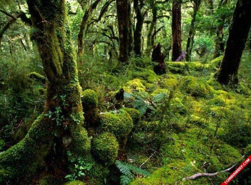 Những hình ảnh đẹp nhất về rừng già nguyên sinh trên thế giới (11)