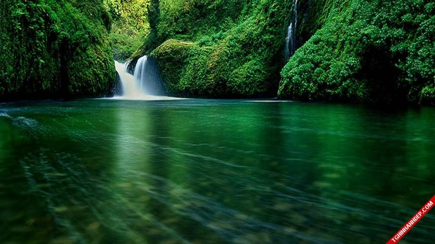 Những hình ảnh đẹp nhất về rừng già nguyên sinh trên thế giới (2)