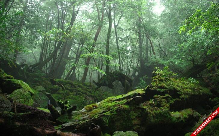 Những hình ảnh đẹp nhất về rừng già nguyên sinh trên thế giới (4)