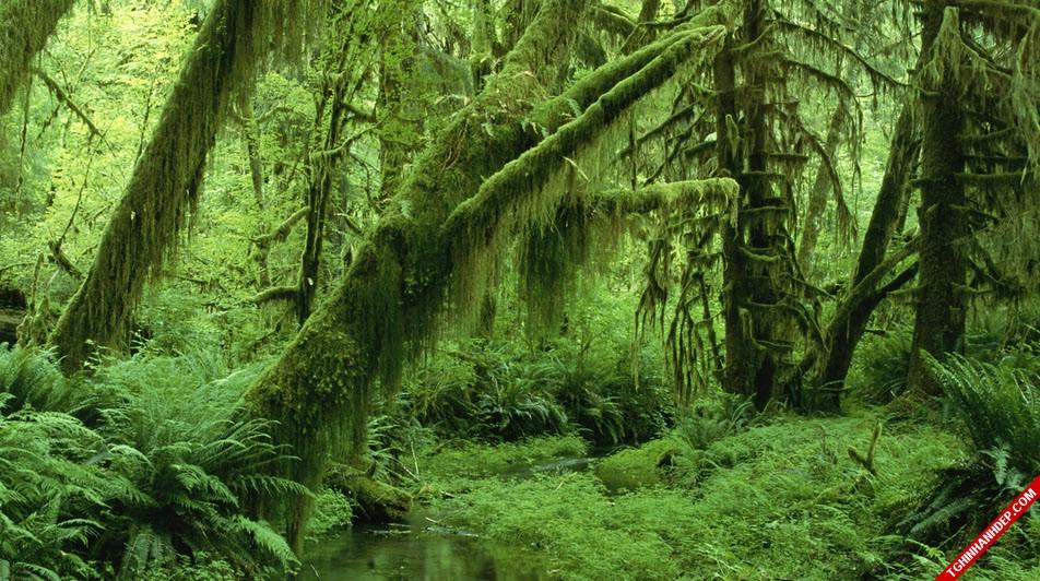 Những hình ảnh đẹp nhất về rừng già nguyên sinh trên thế giới (6)
