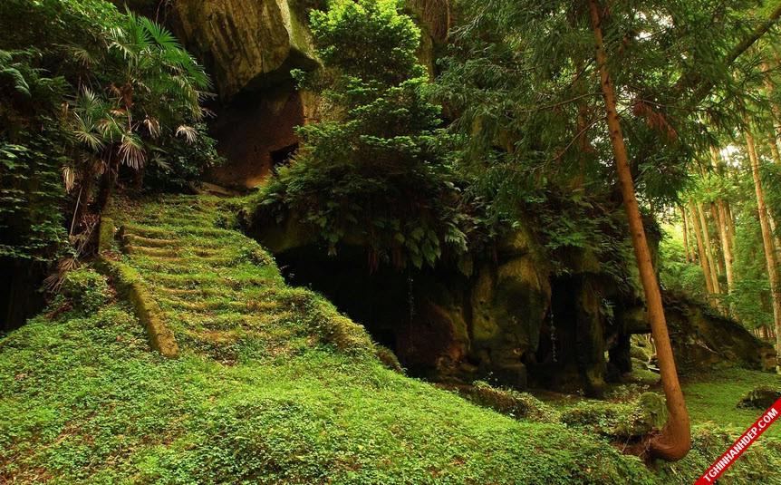 Những hình ảnh đẹp nhất về rừng già nguyên sinh trên thế giới (8)