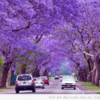 Thích mắt với hình ảnh những con đường đẹp nhất thế giới