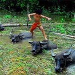 Trở về tuổi thơ với những hình ảnh đẹp nhất về làng quê