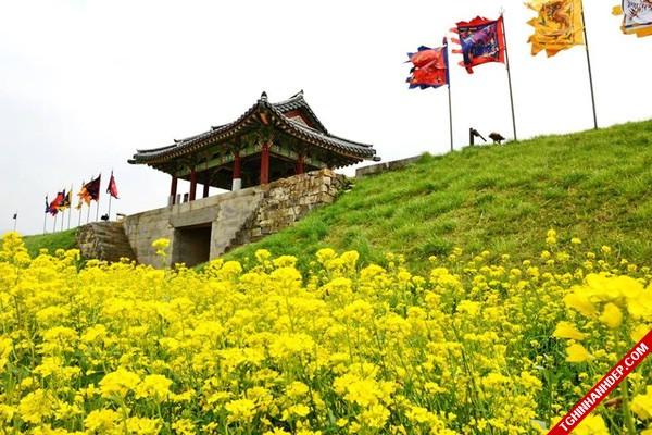 Tháng 4 và những mùa hoa đẹp tuyệt vời ở Hàn Quốc