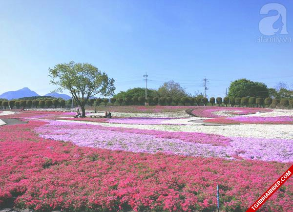 Những hình ảnh đẹp nhất về mùa hoa tháng 5 ở Nhật