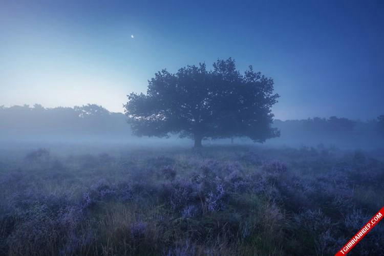 Bộ ảnh đẹp về phong cảnh thiên nhiên Hà Lan