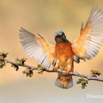 Trọn bộ ảnh đẹp về động vật hoang dã của nhiếp ảnh gia Julian Rad