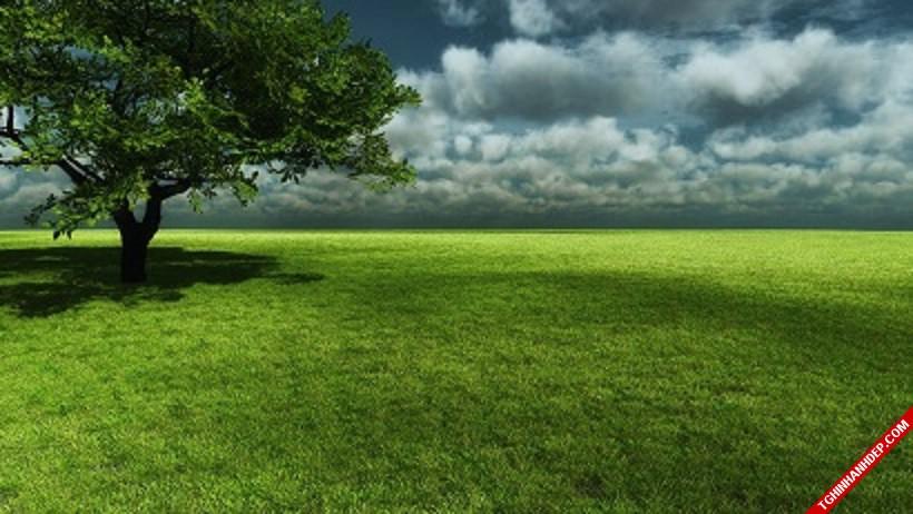 Bộ sưu tập ảnh về cánh đồng cỏ xanh đẹp như tranh vẽ
